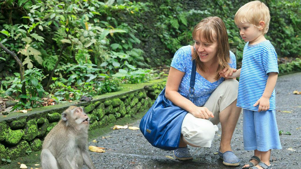Der Affenwald in Ubud - Bali