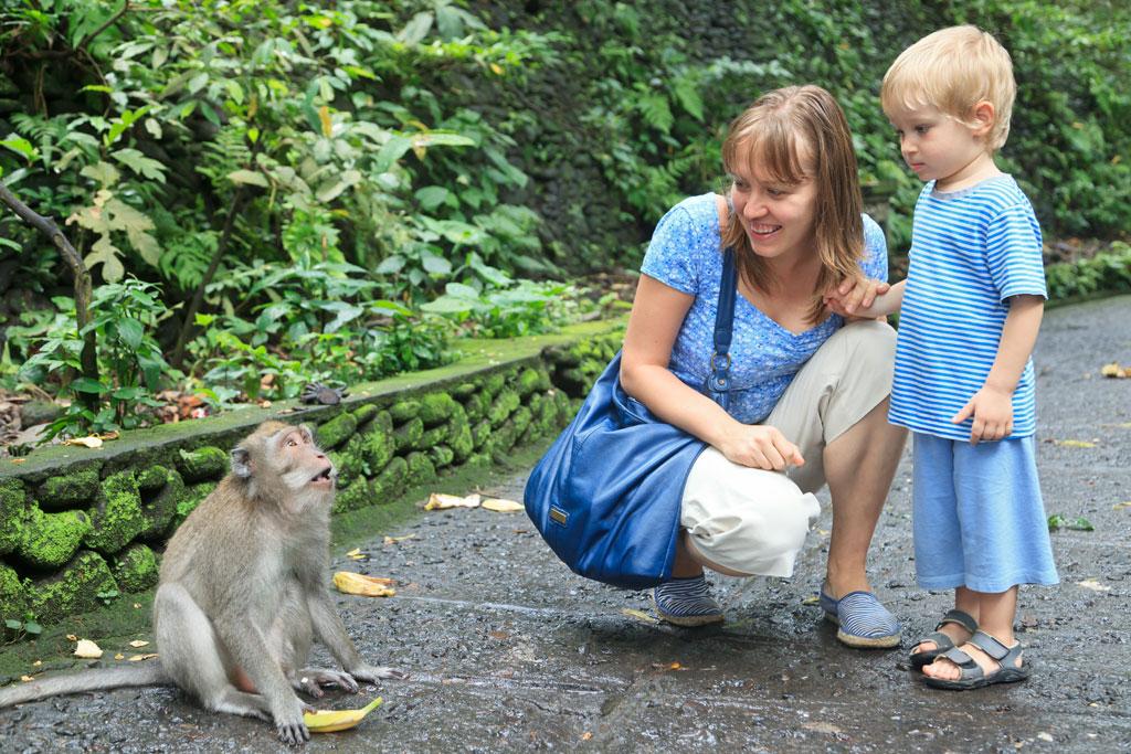 Bali Affenwald: Ihre Tour in den Monkey Forest
