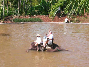 Elefantenreiten im Fluss