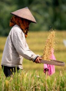 Reisbauer auf Reisterrassen beim Reis-Anbau