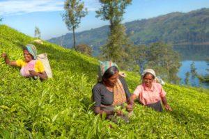 Sri Lanka - Das sanfte Indien Asien Reise