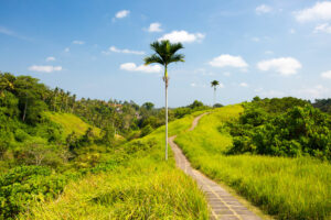 Der Campuhan Ridge Walk in Ubud