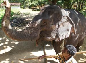 Reiten auf Elefanten