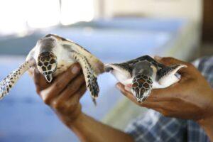 Turtle Island Nusa Dua