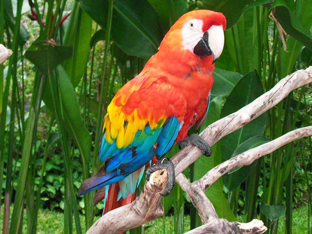 Bali Bird Park - Papagai